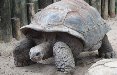 A giant tortoise, that certainly won't fit on top of a post...